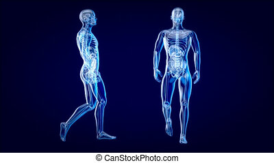 4k, wandelende, concept, man, anatomie