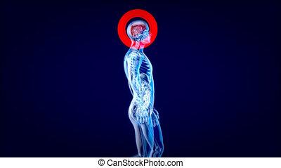 4k, wandelende, concept, man, xray, anatomie