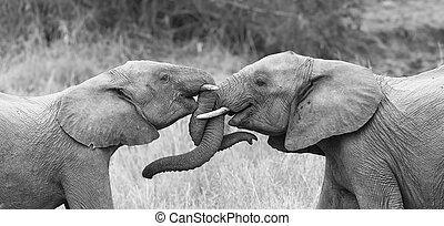 aanhankelijk, conversie, onderbroek, het krullen, twee, groeten, aandoenlijk, artistiek, elefant