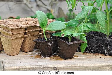aanplant, gevarieerd, seedlings