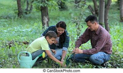 aanplant, gezin, nieuw, boompje