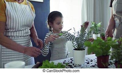 aanplant, grootmoeder, binnen, herbs., moeder, kleine, meisje, thuis