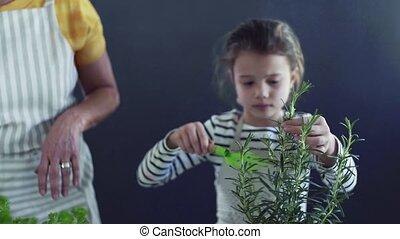 aanplant, grootmoeder, binnen, unrecognizable, kleine, herbs., meisje, thuis