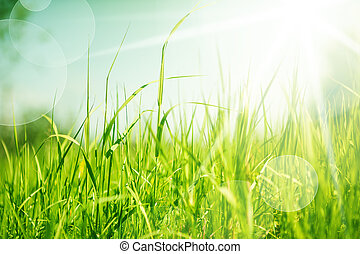 abstract, gras, achtergrond, natuur