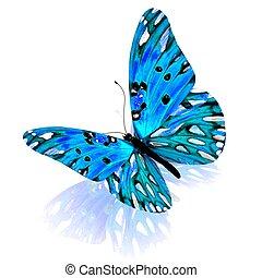 achtergrond., witte , vrijstaand, butterfly.