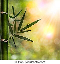 achtergronden, abstract, natuurlijke , bamboe, gebladerte