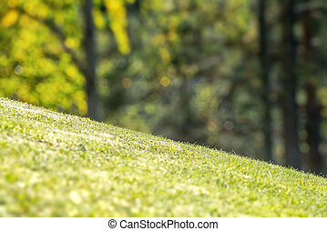 achterplaats, gras, vibrant, schuin, groene