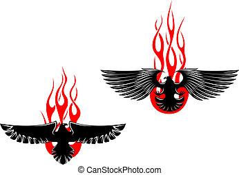 adelaar, van een stam, black , vlammen