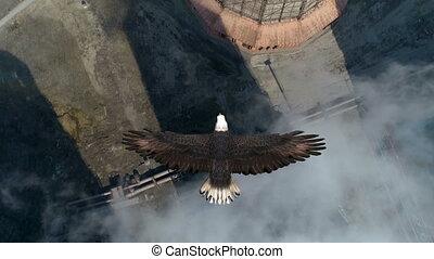 adelaar, vliegen, verkoeling, op, animatie, toren, kaal