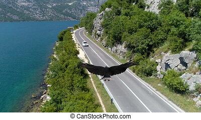 adelaar, zee, vliegen, straat, op, langs, kaal