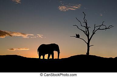 afrika, vultures, silhouette, ondergaande zon , elefant