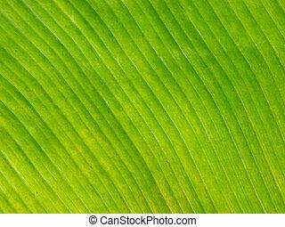 afsluiten, blad, op, banaan