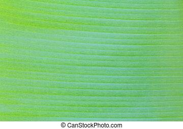 afsluiten, blad, op, textuur, banaan