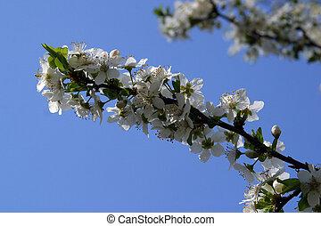 afsluiten, bloemen, op, fruit
