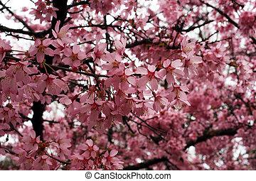 afsluiten, fruit, lente, vroeg, bloemen, op