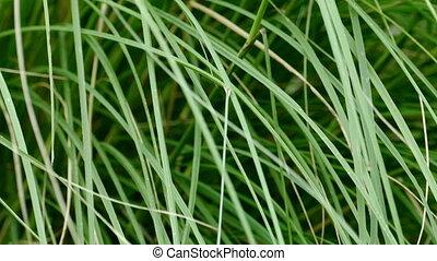 afsluiten, gras, groene, op