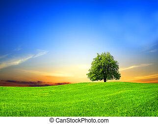 akker, groene, ondergaande zon