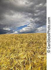 akker, wheaten