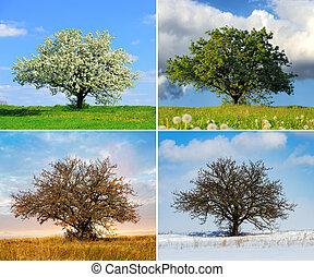 alleen, vier, boompje, seizoen