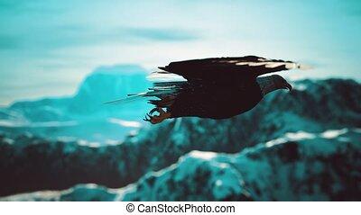 amerikaan, bergen, kaal, vlucht, motie, alaskan, adelaar, op, vertragen