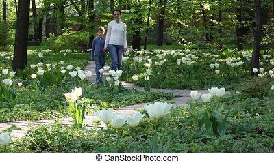 amoung, tulpen, moeder, park, wandelingen, geitje