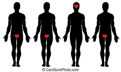 anatomie, liefde
