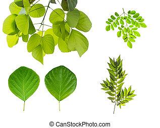 anders, bladeren, af)knippen, verzameling, vrijstaand, achtergrond, witte , insluiten, path.