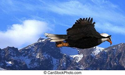 animatie, kaal, bergen, vliegen, adelaar