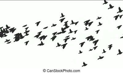 animatie, vogels