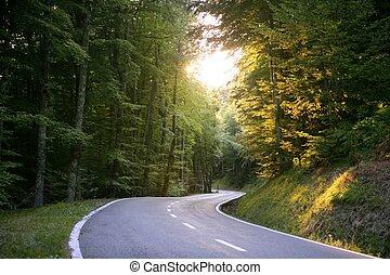 asfalt, bocht, wikkeling, bos, beuk, straat