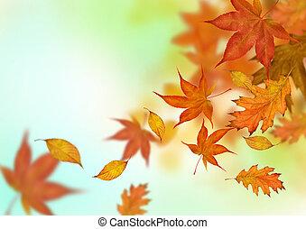autumn leaves, het vallen