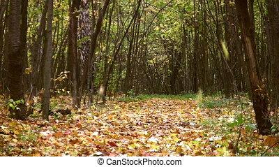 autumn leaves, park, herfst