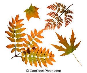 autumn leaves, vrijstaand