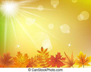 autumn leaves, zonlicht, achtergrond