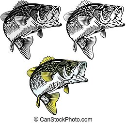 baars, vrijstaand, visje