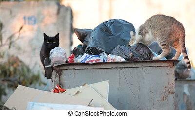 bakken, dakloos, hongerige , restafval, kat