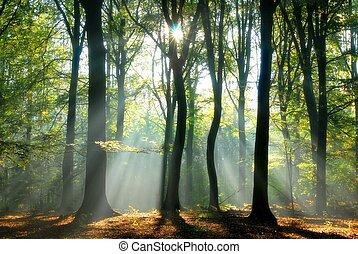 balken, door, bomen, gieten, licht