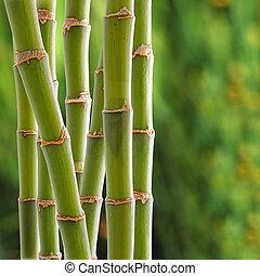 bamboe, backgroung