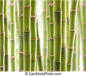 bamboe, jungle