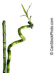 bamboe, vrijstaand
