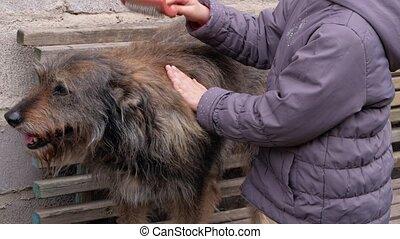bankje, het geven, straat, het kammen, adoptie, dog., zit, canine, handen, buiten, comb., wol, jong meisje, pet., liefde, pluizig, houten, thick-coated, dakloos, bastaard, supportng, care, shelter., lang, concept., dog