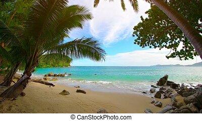 """beautiful, zand, palm, witte , trees"", tropisch strand"