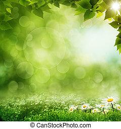 beauty, eco, achtergronden, morgen, bos, groene