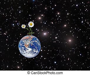 beeld, communie, nasa, earth., gemeubileerd, bloem, dit