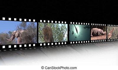 beeldmateriaal, collage, fauna
