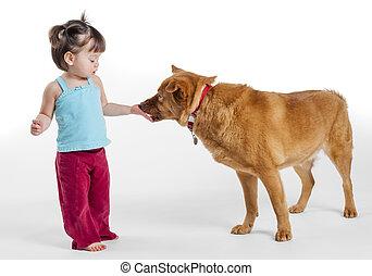 behandelen, meisje, het voeden, dog, jonge