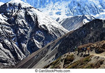 berg, groep, backpacking, bergen, himalayas, trekkers