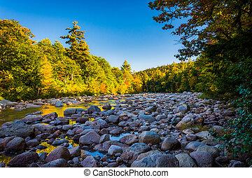 berg, nationale, rivier, bos, nieuw, witte , gierzwaluw, hampshir
