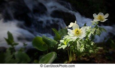 berg, waterval, (1202, wildflower