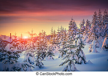 berg, winter, kleurrijke zonsopgang, landscape, bos